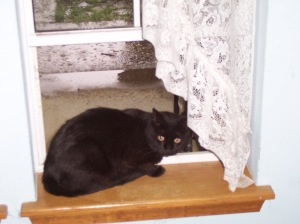 Missy facing while sitting in front window