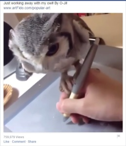 Just working with my owl